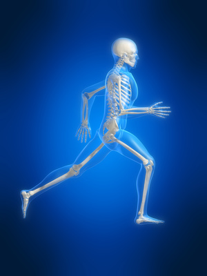 Course Categories Anatomy And Biomechanics Physical Iq Online